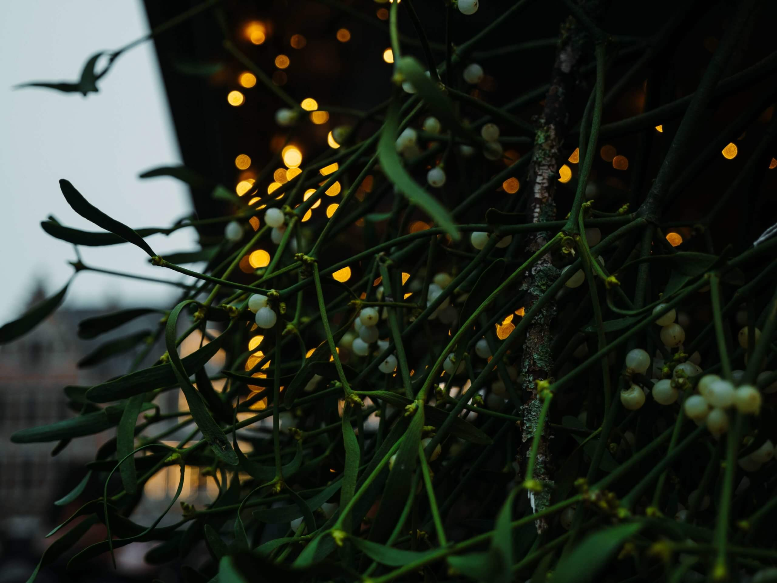 Mistletoe hanging near holiday lights