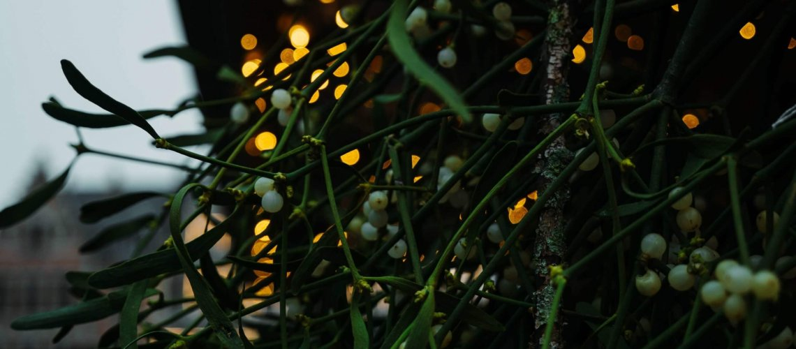 Mistletoe hanging near holiday lights